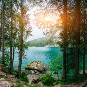 лес озеро