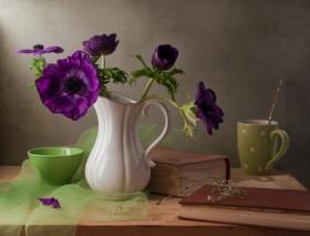 цветы Анемонаструм