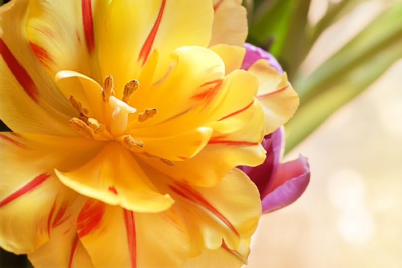 бутон цветка
