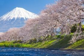 гора сакура