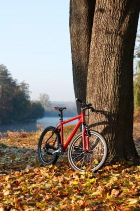 велосипед, дерево