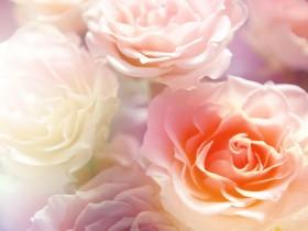 цветы 3д