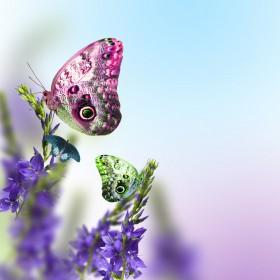 бабочка и фиолетовый цветок