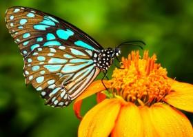 бабочка и цветок