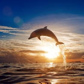 дельфин, закат