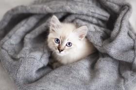 котенок и плед