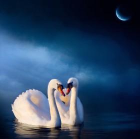 лебеди, луна