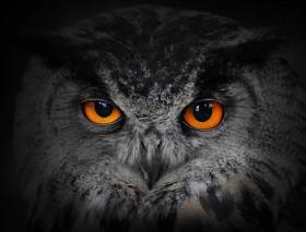 сова на темном фоне